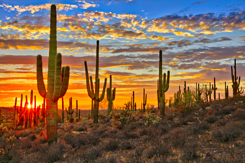 Why own a desert vacation home in phoenix?